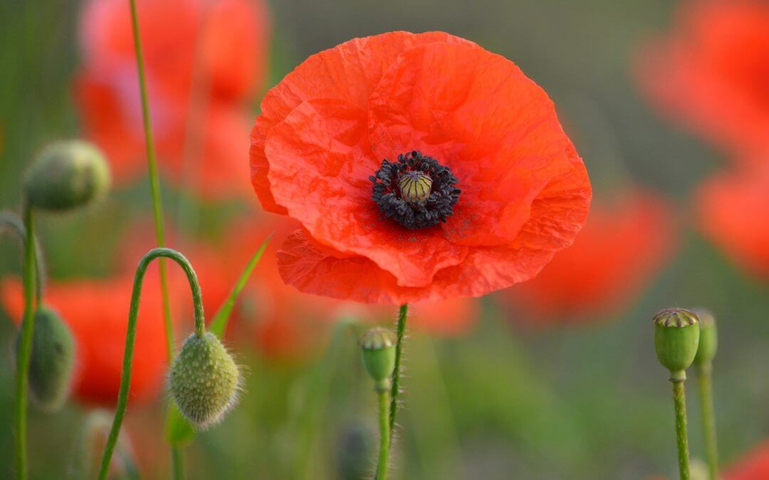 Appeal for Armistice memorial sponsors