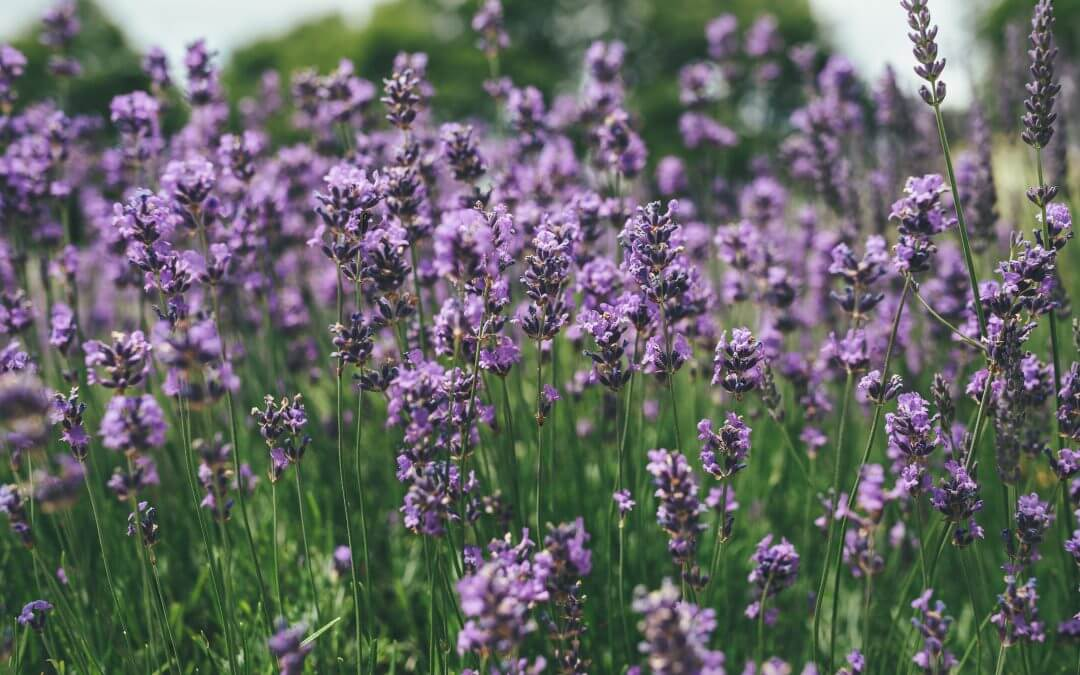 Haslemere Museum holding spring plant sale